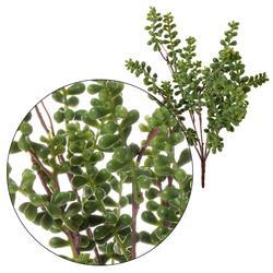 Gałązka zielona 33 cm (R158)