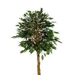 Fikus drzewko 120cm w doniczce (T013)