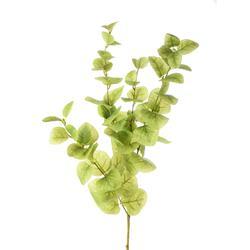 Eukaliptus - gałązka (DK017)