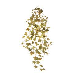 Winorośl - pnącze (B105)