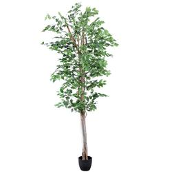Fikus - drzewko (T971)