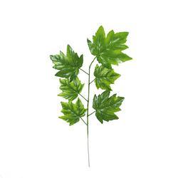 Klon - gałązka liściasta (R017)