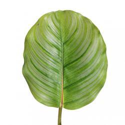 Liść - satyna gumowana (L043)