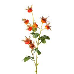 Dzika róża - gałązka (DK217)