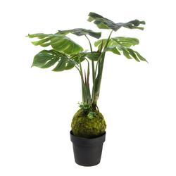 Monstera - drzewko w donicy 90 cm (T019)