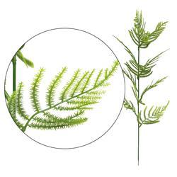 Asparagus - gałązka dekoracyjna 53 cm (L305)
