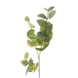 Eukaliptus - gałązka (DK018)