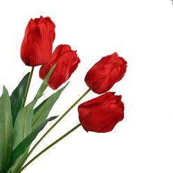 Tulipan - bukiet x12 60 cm (U274E)