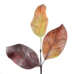 Magnolia - liście dekoracyjne (R125)