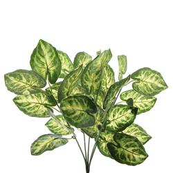 Diffenbachia - bukiet liściasty 39 cm (R192)