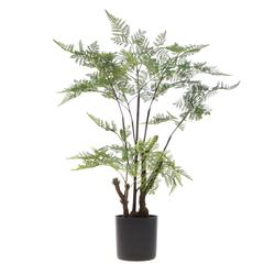Paproć - drzewko w doniczce 60 cm (T004)