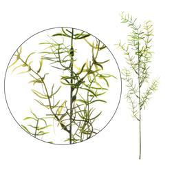 Asparagus - gałązka dekoracyjna 60 cm (L300)