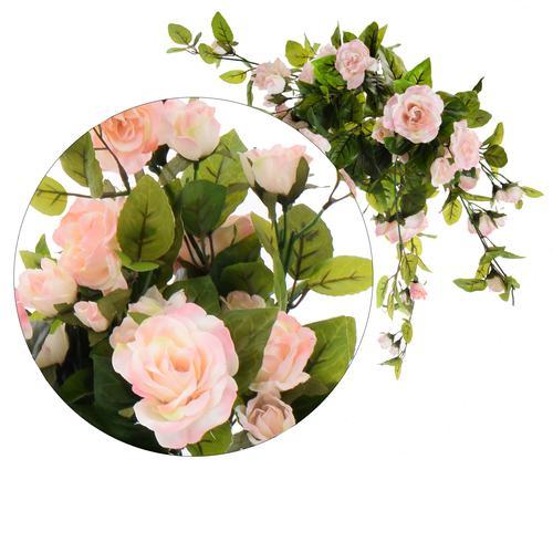 pnącze róż